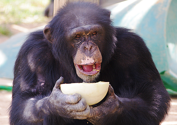 Harper is now oh so happy. c. Chimp Haven