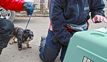 """""""Peanut"""" makes his way into a travel crate."""