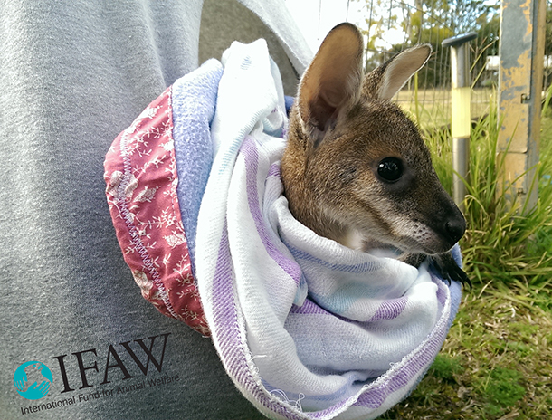 Now joeys need our help!