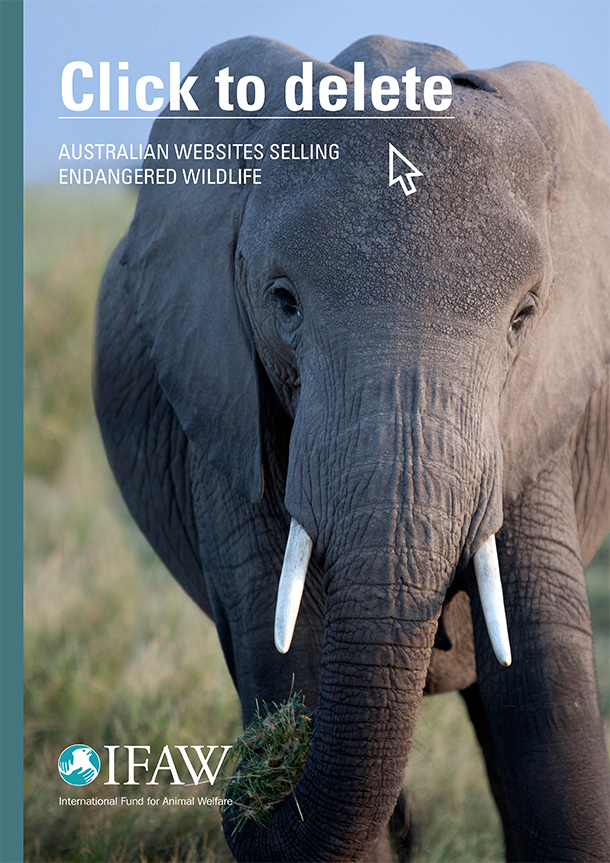 IFAW's report, Click to Delete: Australian Websites Selling Endangered Wildlife, sparked public outcry