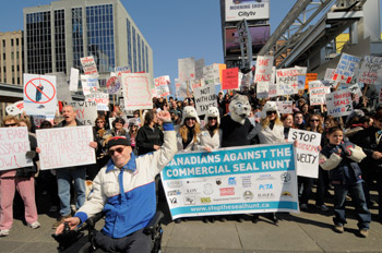 All around the world, people are speaking out against cruel seal hunts on the International Day of Action for Seals.