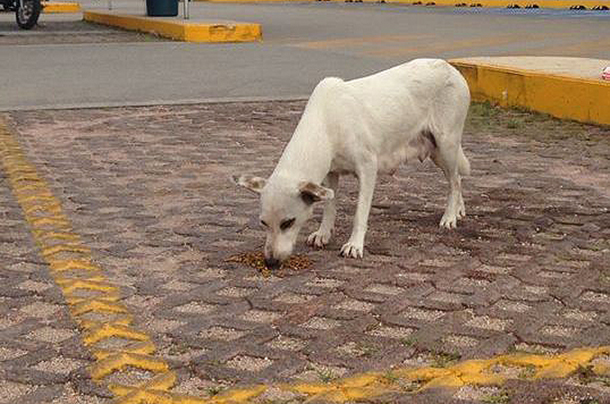 Lola the dog feeding in the store parking lot.
