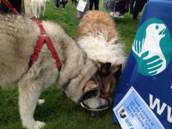 Two furry friends enjoy some refreshment in Hyde Park at the event.