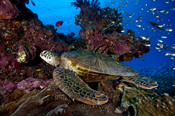The world's largest network of marine reserves would be created under the Australian federal government plan.