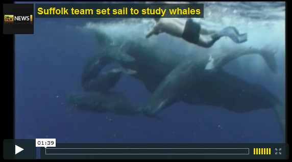 "ITV News video ""Suffolk team set sail to study whales"" – Video launches in new window"