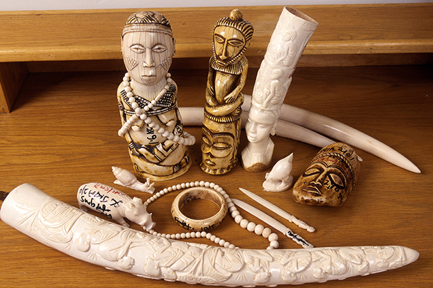 Everyone can help by encouraging friends, family and colleagues to surrender any ivory items in support.