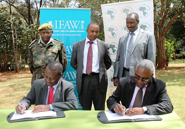 James Isiche, IFAW Regional Director, (left) and Dr Bonaventure Ebayi, Director of LATF, signed the MOU at the Kenya Wildlife Service (KWS) headquarters on May 27, 2014. Gideon Gathara, Conservation Secretary in the Ministry of Environment, Water and Natural Resources of the Republic of Kenya, Benjamin Kavu Assistant Director in charge of Devolution and Community, KWS, and Francis Xavier Rwego the Head of the INTERPOL Regional Bureau attended the signing.