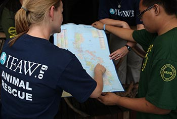 IFAW and PAWS teams plan during their assessment stage on the ground in Manila.