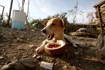 A dog in Monkayo eating out of a coconut. c. IFAW/PAWS
