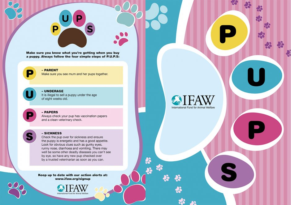 Puppy Buying Advice from IFAW