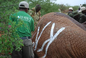 Each site has a name and that forms the first initial of the collared elephant.