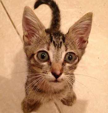 More than 24 hours waiting underground and 3 hours of continuous effort, the kitten finally came out.