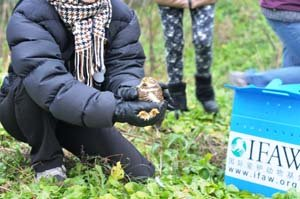 A raptor being released back into the wild after having been rehabilitated at the IFAW Beijing Raptor Rehabilitation Center.