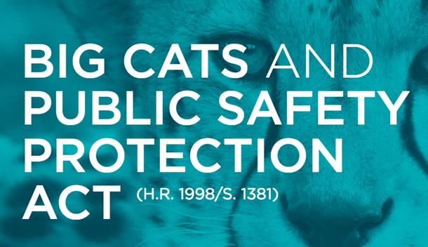 With the help of Hollywood stars and other caring citizen advocates, we hope Congress passes the Big Cats and Public Safety Protection Act.