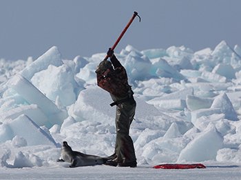 Sealers hunt for harp seals during the 2009 Canadian commercial seal hunt in the Gulf of St. Lawrence. c. IFAW