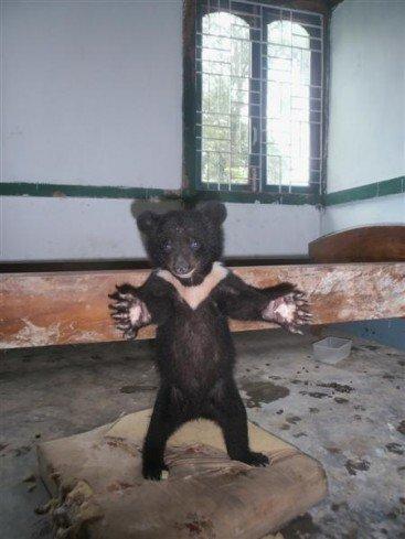 The standing black bear princess.