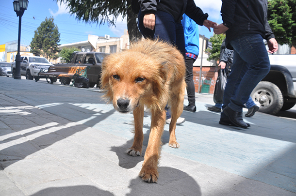 The conference explores ways to help stray dogs – like this one – in your community and around the globe.