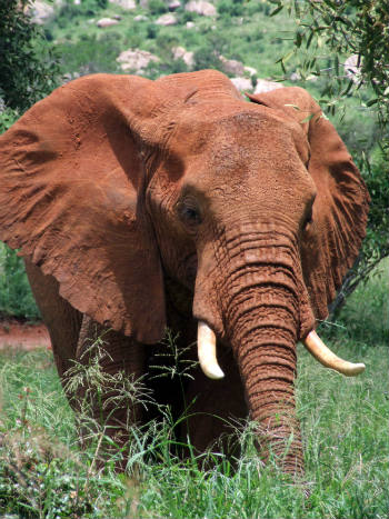 The horror of what is happening with up to 40,000 African elephants losing their lives each year to fuel the increasing demand for ivory needs the world's attention to drive change.