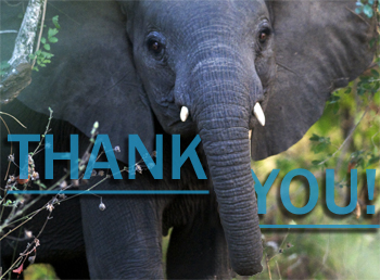 A huge thank you to everyone who donated to help save Asian elephants.