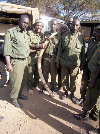 OOGR scouts with the one recovered tusk, weighing 12.5 kilogrammes, presumably from the mother out of the three slain elephants.  Photo courtesy of ATGSA – Wilson Kisipan Tikwa