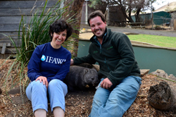 IFAW Vet Valeria Ruoppolo with Greg Irons, Director of Bonorong Wildlife Sanctuary Tasmania and wombat.