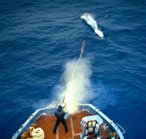 Voor het eerst in honderd jaar tijd worden walvissen in de Zuidelijke IJszee met rust gelaten