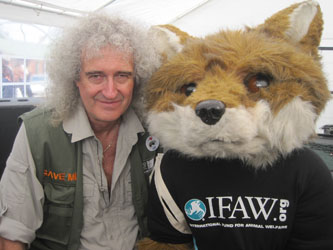 Queen guitarist and wildlife advocate Brian May with IFAW's Freddie the Fox.