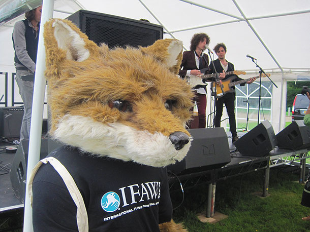 We had a lot of fun with Freddie the fox at the last 'Wildlife Rocks' as he loves these gatherings and is looking forward to this year too.