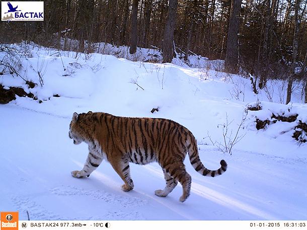Zavetnyi. © Bastak Nature Reserve