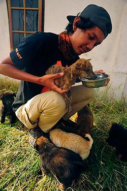 Mambo parvient enfin à se restaurer grâce à l'équipe du refuge. ©IFAW-COP
