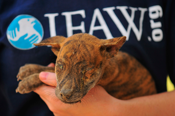 Little Mambo's eyes are sealed shut from infection. © IFAW-COP