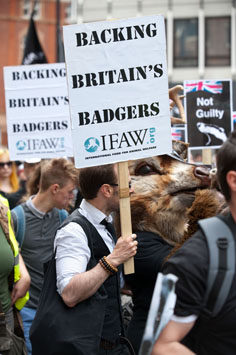 Demonstrators at the recent march in London organized to protest the badger cull.