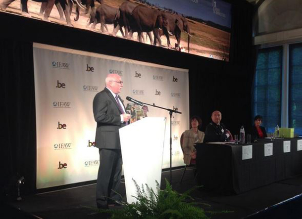 IFAW CEO Azzedine Downes speaking at the Belgium ivory crush.