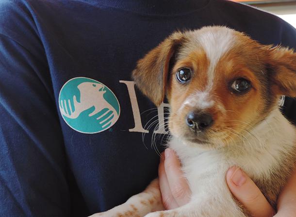 Een noodhulpteam van het IFAW heeft samen met partner UNDP een reddingsactie op touw gezet voor dieren die door de overstromingen in Bosnië zijn getroffen. Op deze foto staat een hulpverlener van het IFAW met een puppy die uit het water is gered. Het dier is inmiddels ondergebracht bij een gezin in deze streek. c. IFAW