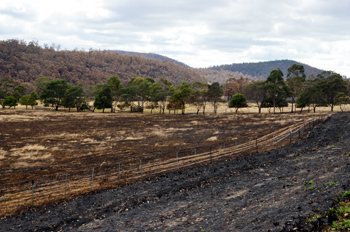 One Australian landscape after the devastating bushfires.