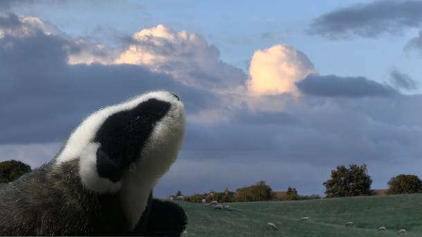 If I was a badger in England I would look up at the sky right now, because although the sight may be scary at the moment, there may be some hope for the future.