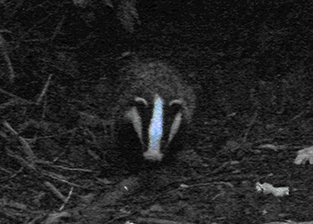 Be sure to make your voice heard for our badgers!