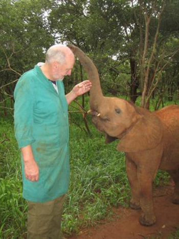 One of the young orphan elephants investigating Dr. Ian Robinson (VP of Programs and International Operations) during a walk in the bush.