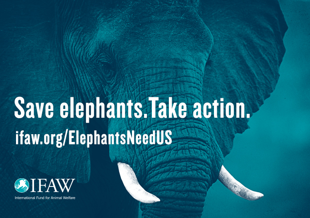 Save elephants. Take action.