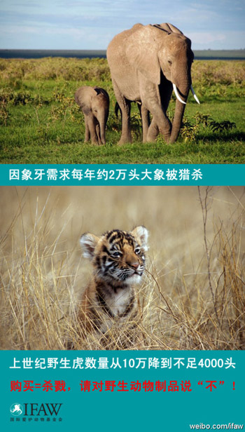 The covers of Chinese language books about animal welfare for young readers.