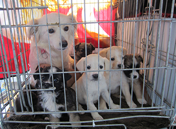 A mom and her pups, all waiting to be sterilized – all were brought in by their owner. C. IFAW/H. Lentz