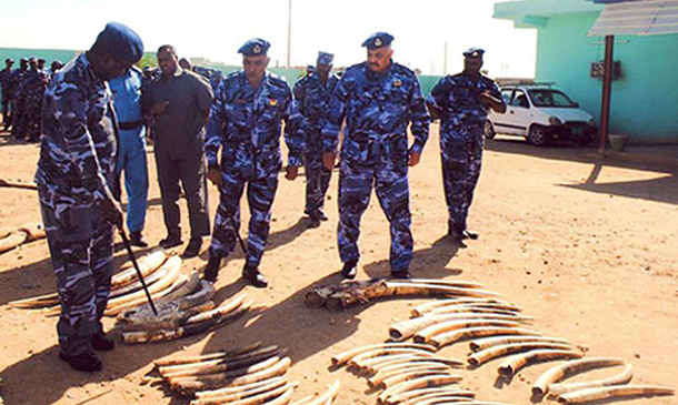 An estimated 115 elephants were killed for such an amount of confiscated ivory.