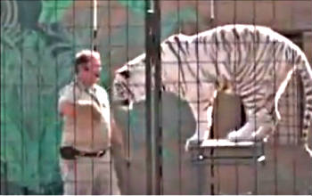 IFAW strongly believes that wild animals belong in the wild; however, when kept in captive situations, such environments must provide elements that ensure the best possible welfare for each individual animal. Traveling circus acts, such as this one, do not come close to prioritizing the biological and psychological needs of their wild animals.