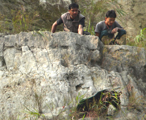 IFAW-WTI team members peaking over a ledge to see Sange the bear cub.