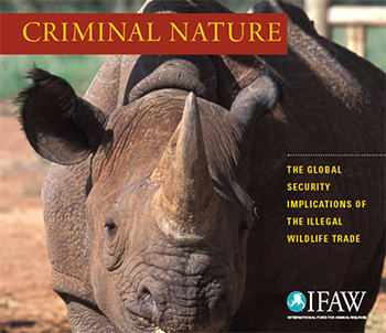 Check out our infographic below with several alarming facts pulled from the IFAW Criminal Nature report on wildlife crime.
