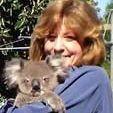 Denise Garratt with a rescued koala.