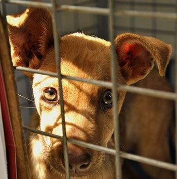 The USAD APHIS proposal would help protect dogs from puppy mills.