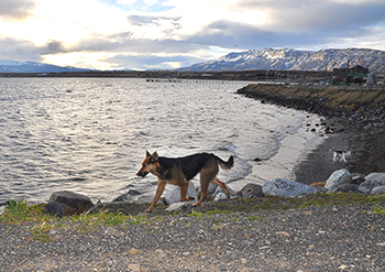 Roaming dogs are a common sight on the streets throughout Puerto Natales.