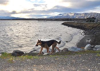 Streunende Hunde sind ein typisches Bild in Puerto Natales
