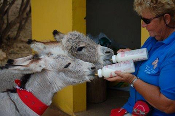 IFAW donated 5000 euros to the Donkey Sanctuary Bonaire.